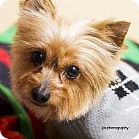 Adopt A Pet :: Jack - Baton Rouge, LA