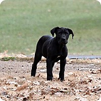 Adopt A Pet :: Ruby - Marion, IL