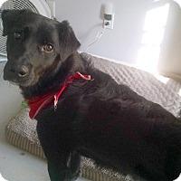 Adopt A Pet :: Sammy - Largo, FL