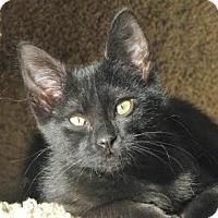 Adopt A Pet :: Sunshine - Davis, CA