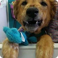 Adopt A Pet :: Millie - Murrells Inlet, SC