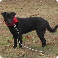 Adopt A Pet :: Sealy - Springfield, VA