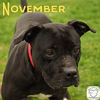 Adopt A Pet :: November - Washburn, MO