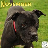 Adopt A Pet :: November - Washburn, MO