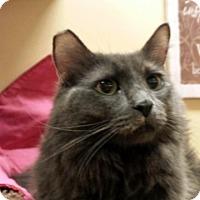 Adopt A Pet :: Nadine - Las Vegas, NV