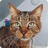 Adopt A Pet :: Ted - Newport, KY