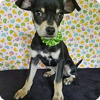 Adopt A Pet :: Cam - Troutville, VA