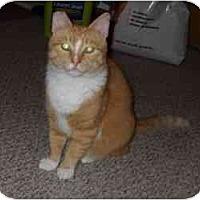 Adopt A Pet :: Opie - Milwaukee, WI