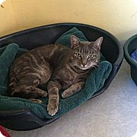 Adopt A Pet :: Gopher - Lancaster, MA