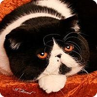 Adopt A Pet :: Tucker - Beverly Hills, CA