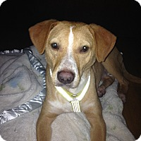 Adopt A Pet :: Mr. Wiggles - Brooklyn, NY