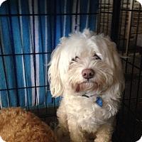 Adopt A Pet :: Luke - Orlando, FL