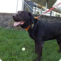 Adopt A Pet :: Rocket - Cedar Rapids, IA