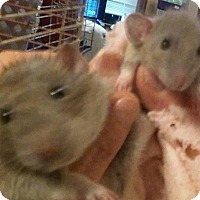 Adopt A Pet :: ERNIE and ERNESTO - Philadelphia, PA