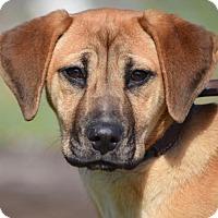 Adopt A Pet :: Mary Jane Watson - Brooklyn, NY
