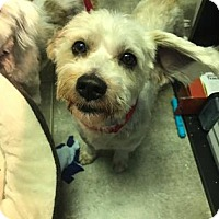 Adopt A Pet :: Sega - Bradenton, FL