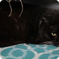 Adopt A Pet :: Steve Martin - Marietta, OH