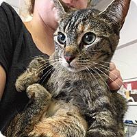Adopt A Pet :: Melanie - Oakland, CA