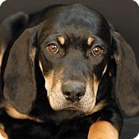 Adopt A Pet :: Meribelle - Newland, NC