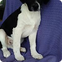 Adopt A Pet :: Eric meet me 4/21 - Manchester, CT