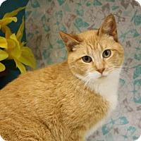 Adopt A Pet :: Anita - Menominee, MI