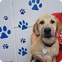 Adopt A Pet :: Layla - Oviedo, FL