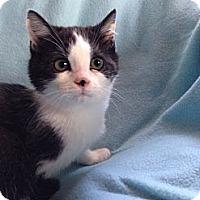 Adopt A Pet :: Bella - Simpsonville, SC