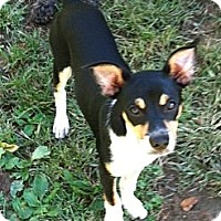 Adopt A Pet :: Andy - Plainfield, CT