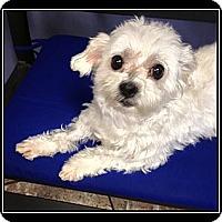 Adopt A Pet :: Aspen - Ft. Bragg, CA