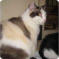 Adopt A Pet :: Asia - Jenkintown, PA