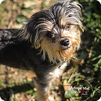 Adopt A Pet :: Winni - Arlington, TX