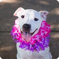 Adopt A Pet :: Opal - Reisterstown, MD