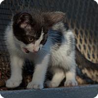 Adopt A Pet :: Sheldon? - Brooklyn, NY