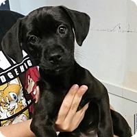Adopt A Pet :: Mick ~ Adoption Pending - Youngstown, OH