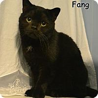 Adopt A Pet :: Fang - Oyster Bay, NY