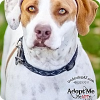 Pointer Mix Dog for adoption in Chandler, Arizona - ROSIE 2