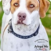 Adopt A Pet :: ROSIE 2 - Chandler, AZ
