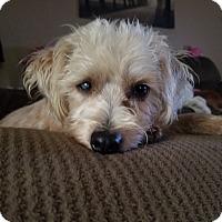 Adopt A Pet :: Ferris - San Antonio, TX