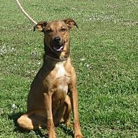 Adopt A Pet :: Clark - Allentown, PA