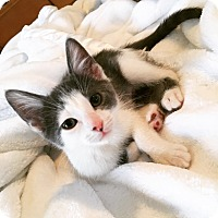 Adopt A Pet :: Maribelle - Colmar, PA