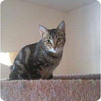 Adopt A Pet :: Vinnie - Phoenix, AZ