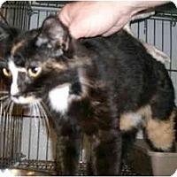 Adopt A Pet :: Pretty Girl - Jeffersonville, IN