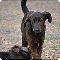 Adopt A Pet :: Mystery - New Boston, NH