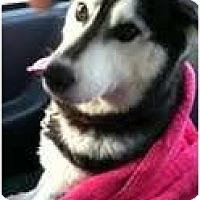 Adopt A Pet :: Hailey - Golden, CO