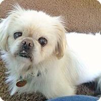 Adopt A Pet :: King - Vansant, VA
