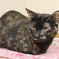 Adopt A Pet :: Vivian - Whitehall, PA