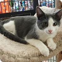 Adopt A Pet :: Pretzel - Knoxville, TN