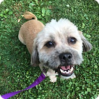 Adopt A Pet :: Winston - Nanuet, NY