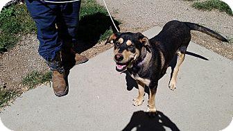 Hound (Unknown Type) Mix Dog for adoption in Walthill, Nebraska - Royal