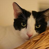 Adopt A Pet :: Starsky - Canoga Park, CA